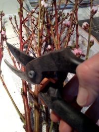 Big bunch of blossomed branches for the side board