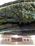 """Lacinato"", or Tuscan Kale"