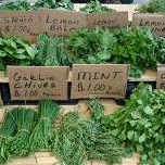 Herbs at Market