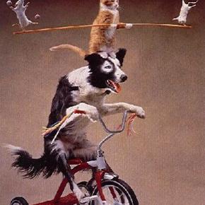 Monday Mantra: You CAN teach an old dog newtricks!