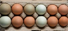 Pretty pasture-raised eggs