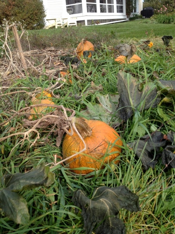 From Heidi's field to...