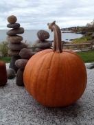 Pumpkin from Heidi's field