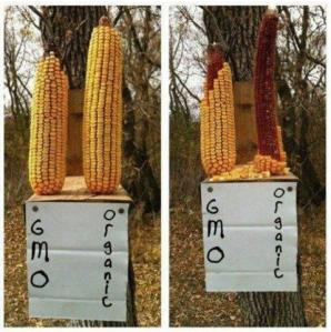 If squirrels won't eat it....