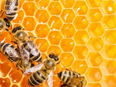 Monday Mantra: All we are saying… is Give Bees aChance!